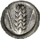 Photo numismatique  VENTE 6 oct 2017 - Coll Dr Y. Goalard et divers GRECE ANTIQUE Italie - Lucanie Métaponte (550-450) 43- Statère incus, (550-450).